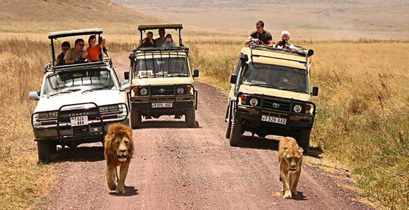 Safari vacation in Tanzania