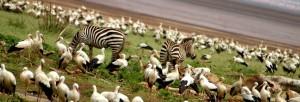 Serengeti and Ngorongoro Crater
