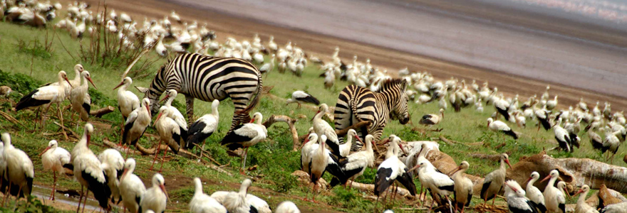 Serengeti and Ngorongoro Crater