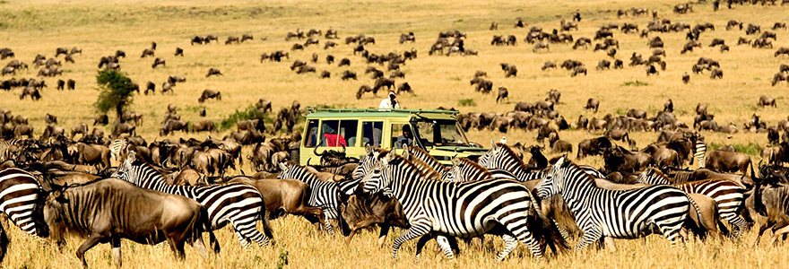 National Park Tanzania