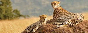 All about safaris
