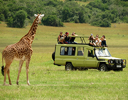 Tanzania safari vacations