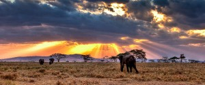tanzania safari vacations
